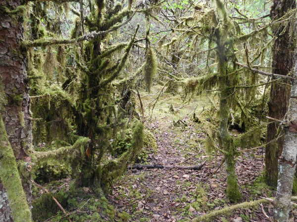 Moss in Rain Forest