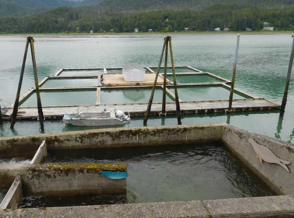 Pre-release Salmon Nets