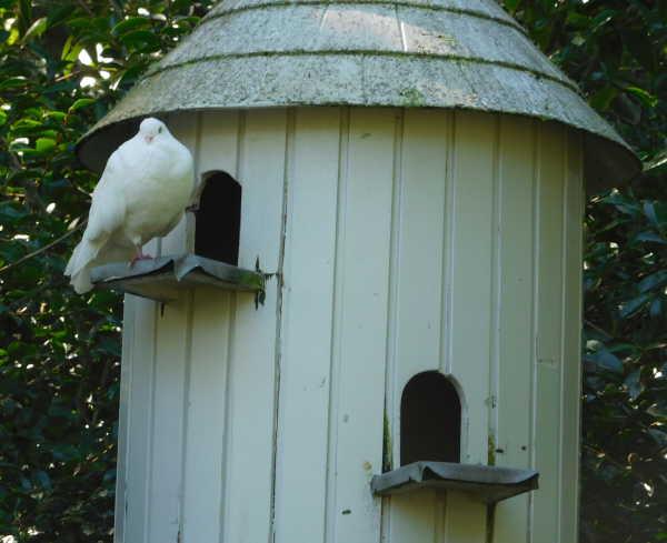 Hamilton Garden Birdhouse
