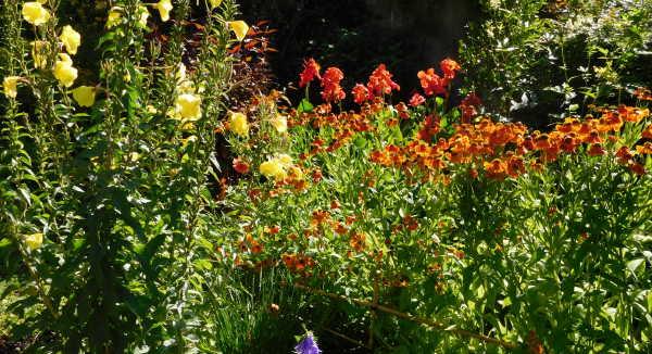 Hamiltton Flowers